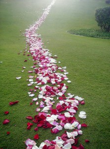allee_petales_deco_ceremonie_laique