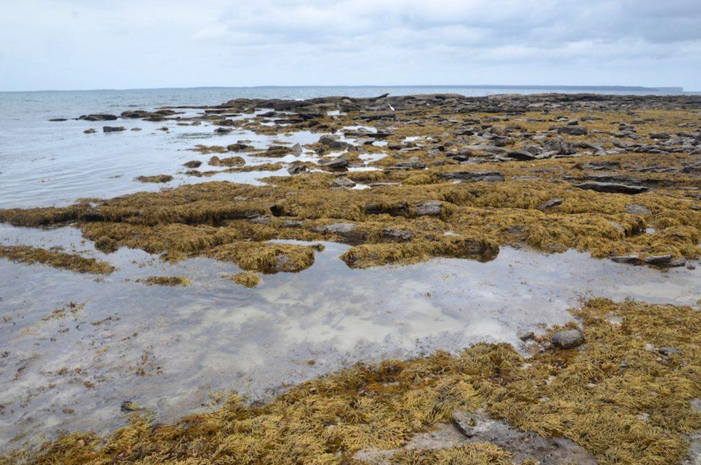 Jervis Bay en Australie
