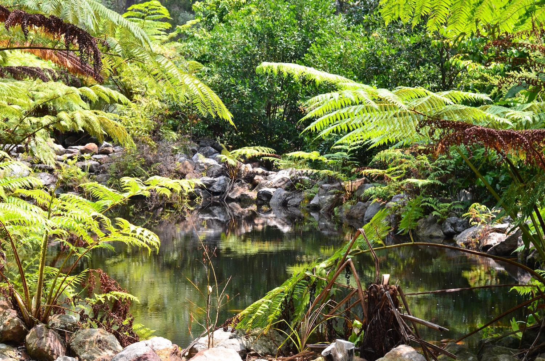 Jardin botanique à Jervis Bay